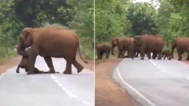 नन्हे हाथी की मौत के बाद हाथियों के झुंड ने निकाली 'अंतिम यात्रा', वीडियो देख छलक पड़ेंगे आंसू