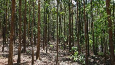 World Environment Day 2021: झारखंड में सखी मंडल की महिलाएं कर रही जंगलो की पहरेदारी