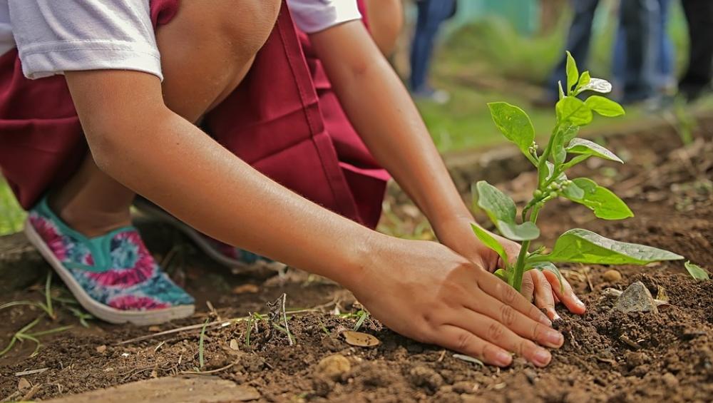 फिलीपींस: पर्यावरण बचाने के लिए सरकार ने लागू किया अनोखा कानून, 10 पेड़ लगाने के बाद ही मिलेगी ग्रेजुएशन की डिग्री
