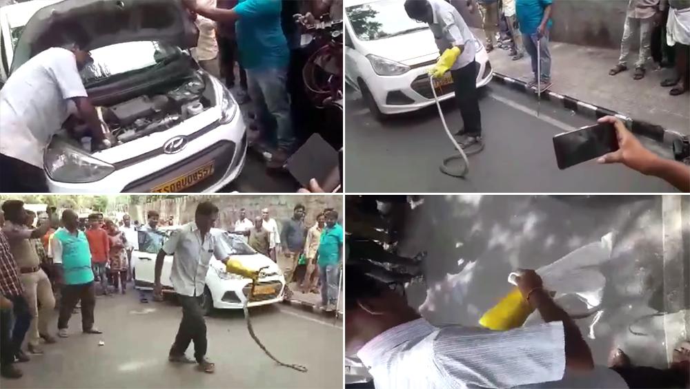 आंध्रप्रदेश: तिरुमला में कार की इंजन से निकला 8 फीट लंबा सांप, देखें Video