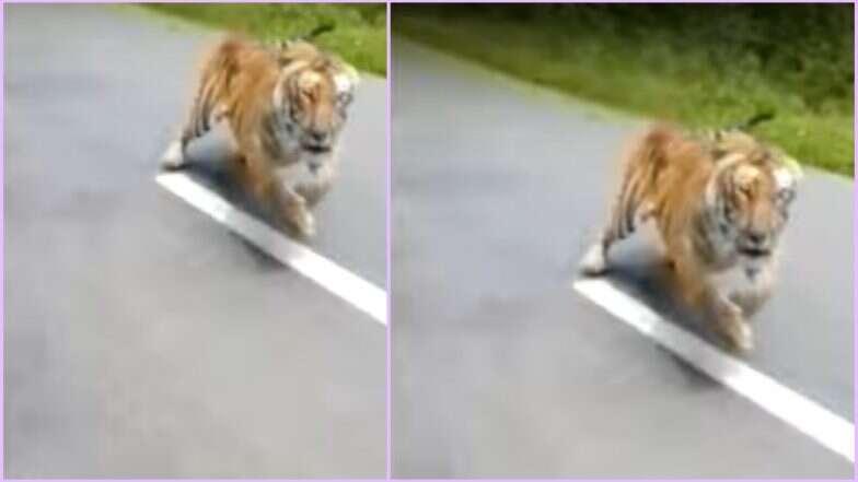 केरल के वायनाड में बाइक सवार दो लोगों के पीछे पड़ गया बाघ, देखें Video