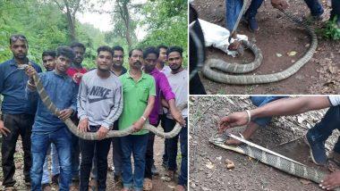 ओडिशा में पकड़ा गया 11 फीट लंबा और 25 किलो वजनी विषैला सांप, देख लोगों के उड़े होश