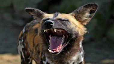 दिल्ली में आवारा कुत्ते को पीटकर मार डालने के मामले में 2 गिरफ्तार