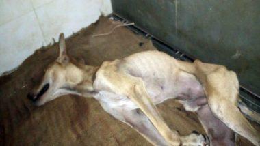 बारिश से बचने के लिए बिल्डिंग में घुसा कुत्ता, गार्ड ने बेरहमी से पीटा, कोमा में पहुंचा बेजुबान जानवर, देखें वायरल वीडियो