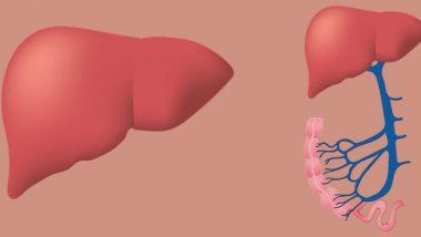World Hepatitis Day 2019: हेपेटाइटिस आपके लिवर को कर सकता है डैमेज, जानें इस बीमारी के लक्षण और बचाव के उपाय