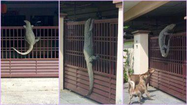 'Godzilla' Monitor Lizard: घर के दरवाजे पर चढ़ गई 'विशालकाय' छिपकली, देखें वायरल तस्वीरें