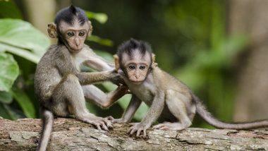 दिल्ली को 'बंदर मुक्त' बनाने के लिए कराई जाएगी जनगणना, अब तक करोड़ों हो चुके है खर्च