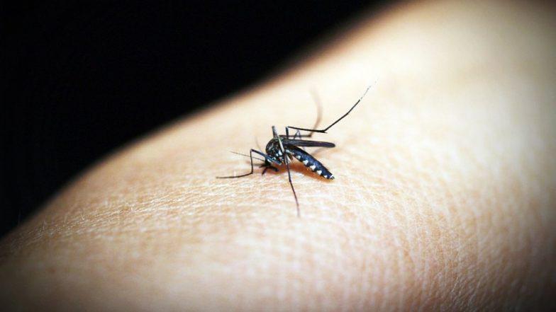 बरसात में मच्छरों के काटने से हो सकती हैं गंभीर बीमारियां, इन 5 घरेलू नुस्खों से पाएं निजात