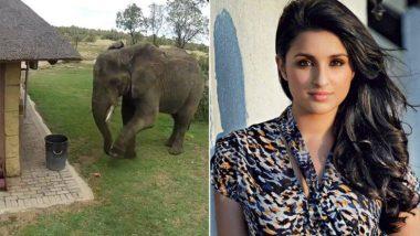 हाथी ने इंसानों को दिया ये अहम संदेश, परिणीती चोपड़ा भी वीडियो शेयर करने पर हुईं मजबूर