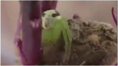चीन में दिखी इंसानी चेहरे वाली अनोखी मकड़ी, देखें वायरल वीडियो