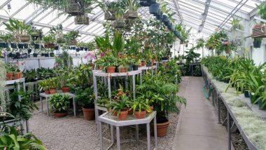 बारिश में सता रहा है डेंगू-मलेरिया का खतरा, मच्छरों को दूर भगाने के लिए घर में लगाएं ये 5 पौधे