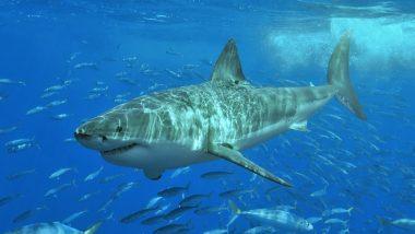 मछली पकड़ने गई लड़की के सामने अचानक आ गई शार्क, फिर जो हुआ..देखें हैरतअंगेज VIDEO