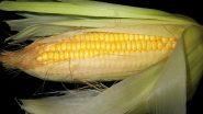 Health Benefits of Corn: अपने आहार में कॉर्न शामिल करने से होंगे ये 5 अद्भुत स्वास्थ्य लाभ