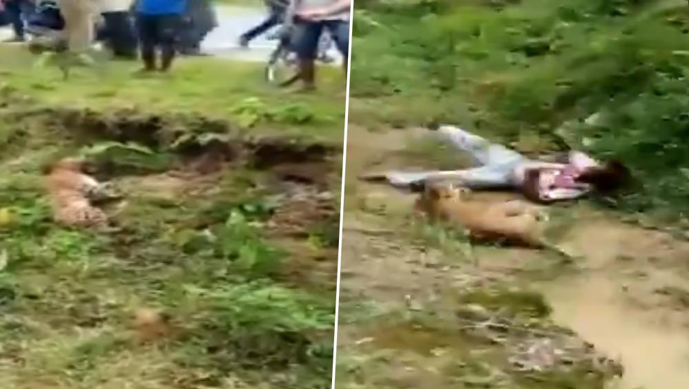 पश्चिम बंगाल: जख्मी तेंदुए का शख्स को फोटो लेना पड़ा महंगा, गुस्साए जानवर ने कर दिया हमला, देखें वीडियो