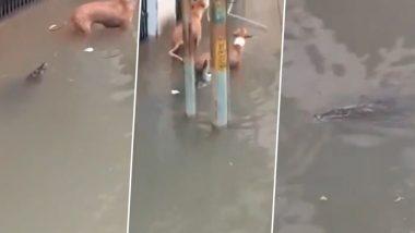 गुजरात : बाढ़ के पानी से भरी सड़क पर आया मगरमच्छ, किया कुत्ते पर हमला था, देखें वायरल वीडियो