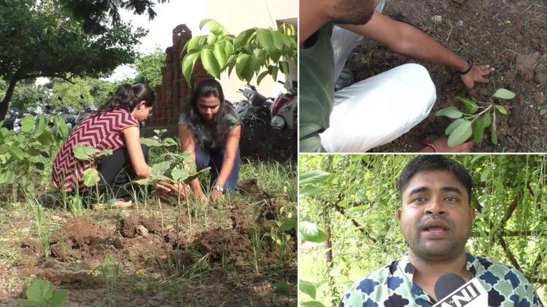 सूरत: गुजरात यूनिवर्सिटी प्रशासन की अनोखी पहल, गलती करने पर स्टूडेंट्स को देते हैं पौधे लगाने की सजा