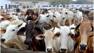 यूपी: बीजेपी नेता भुक्कल नवाब ने की घोषणा, कहा- रक्षा बंधन के दिन गायों को बांधेंगे राखी