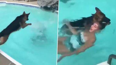 कुत्ते को इसलिए कहा जाता है इंसानों का सबसे वफादार साथी, VIDEO देख जरुर करेंगे तारीफ