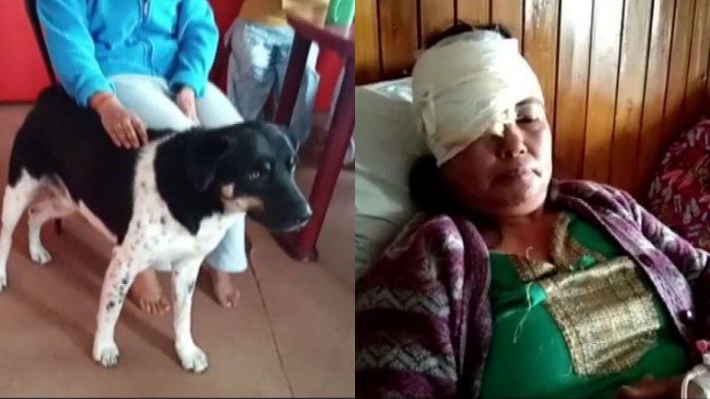 दार्जिलिंग: महिला के लिए मसीहा बना पालतू कुत्ता, तेंदुए ने किया हमला तो इस वफादार जानवर ने बचाई उसकी जान