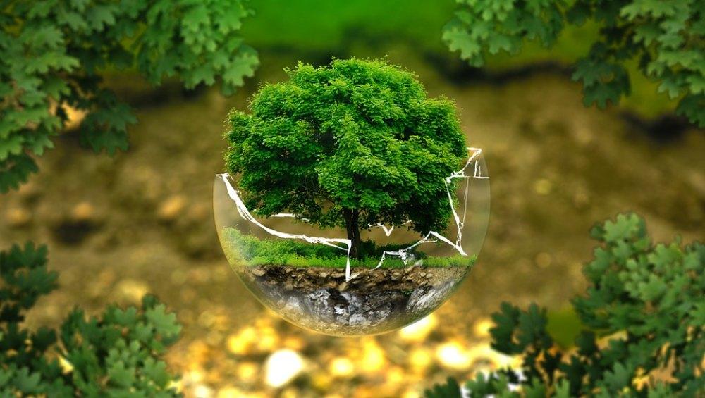 सकारात्मक पहल! पर्यावरण संरक्षण के लिए हिमाचल प्रदेश सरकार की नई मुहिम, पेड़ लगाने व बचाने वाले स्कूलों को ही दोबारा मिलेगी मान्यता