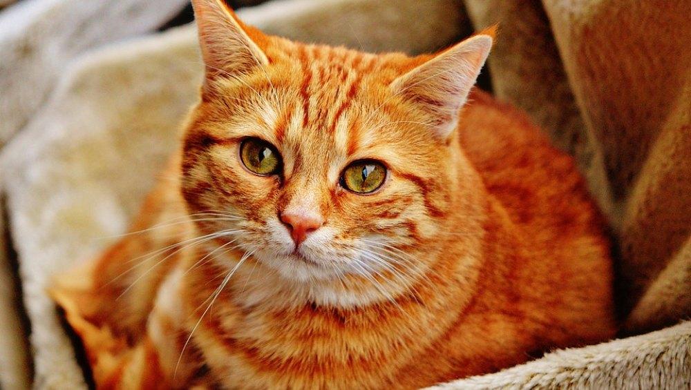 कोरोनावायरस संक्रमण के डर से हाउसिंग मैनेजमेंट ने बिल्ली जिंदा दफनाया