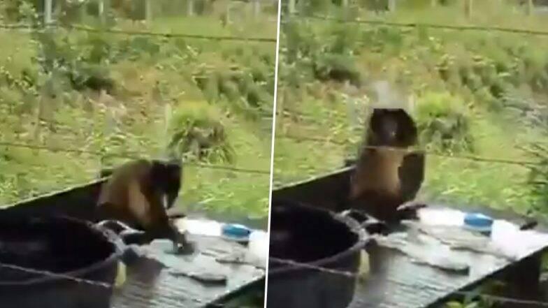 देसी अंदाज में कपड़े धोते इस बंदर का मजेदार वीडियो हुआ वायरल, जिसे देख आप भी नहीं रोक पाएंगे अपनी हंसी