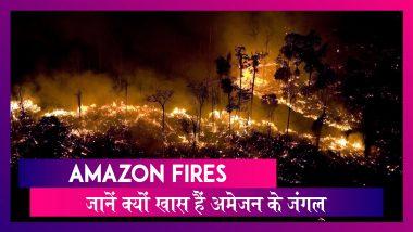 Amazon Rainforest Fire:ब्राजील की राजधानी में दिन में छाया अंधेरा,जानें क्यों खास हैं अमेजन के जंगल
