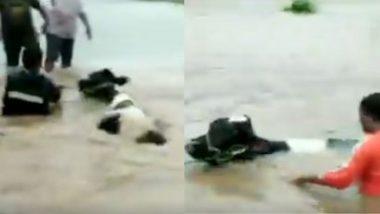 महाराष्ट्र: पुणे में बाढ़ में फंसी गाय, NDRF की टीम ने ऐसे बचाई उसकी जान, देखें वीडियो