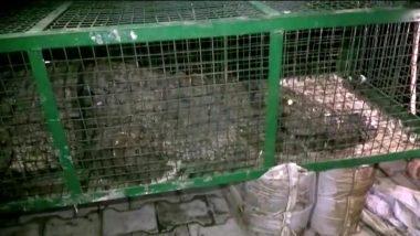 गुजरात: वडोदरा के करेलीबाग से वन विभाग को मिला 14 फिट लंबा मगरमच्छ