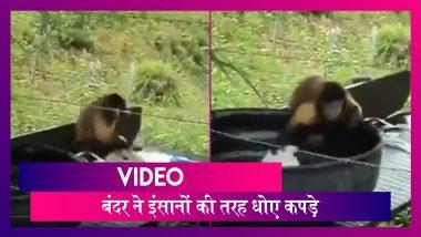 बंदर का इंसानों की तरह कपड़े धोते हुए वीडियो हुआ वायरल   Monkey