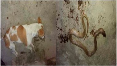 बिहार: कुत्ते ने मालिक के प्रति दिखाई वफादारी, जान बचाने के लिए सांप से जा भिड़ा