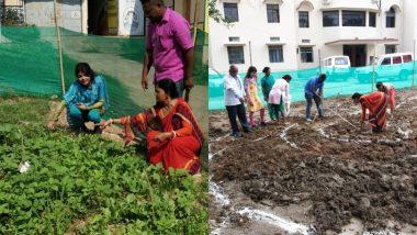 झारखंड में ग्रामीण महिलाएं 'किचन गार्डन' से दूर कर रही हैं कुपोषण की समस्या, अस्पतालों और स्कूलों में की जा रही है इस योजना की शुरुआत