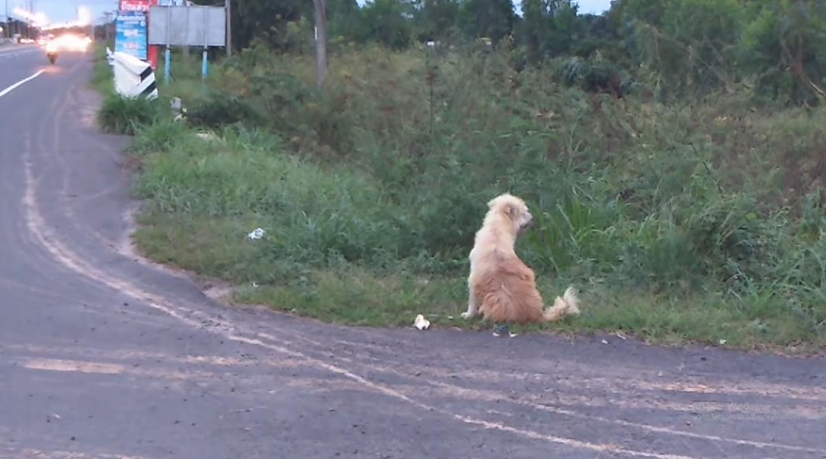 थाईलैंड: कुत्ता सड़क पर कर रहा था मालिक का इंतजार, चार साल बाद हुई इमोशनल मुलाकात, देखें वीडियो