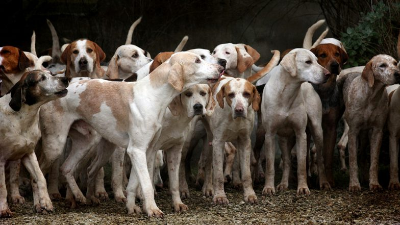 महाराष्ट्रः 100 आवारा कुत्तों के मुंह-पैर बांधकर सड़क पर फेंका, 90 की मौत- जांच शुरू