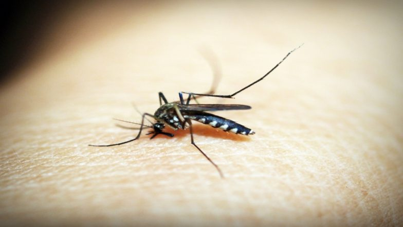 बिहार में पटना सहित राज्य के कई हिस्सों में बढ़ रही डेंगू के मरीजों की संख्या, 18 चिकुनगुनिया और 43 जापानी इंसेलाइटिस के मिले मरीज