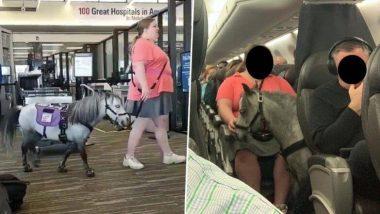 फ्लाइट में घोड़ा ! अमेरिकन एयरलाइंस के विमान में अपने पालतू घोड़े के साथ सफर करती दिखी महिला, दूसरे यात्री हुए हैरान (Watch Video)