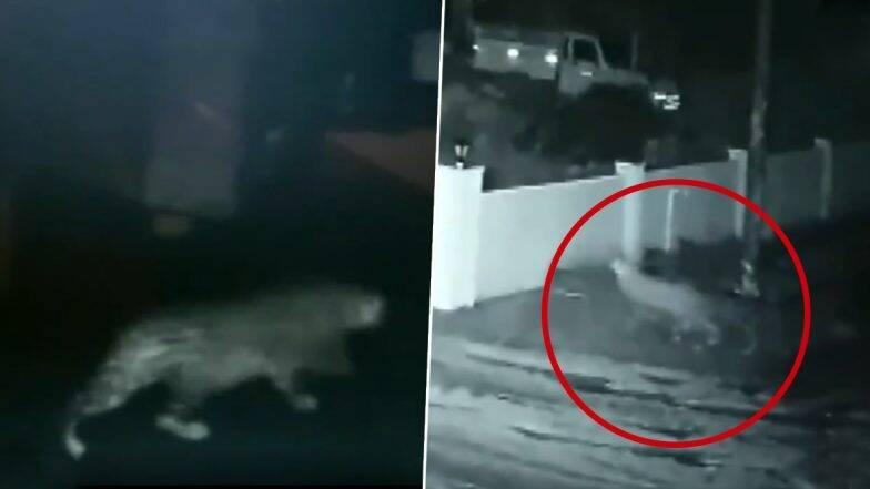 कर्नाटक में दीवार फांदकर घर में घुसा तेंदुआ, कुत्ते को बनाया शिकार, देखें वीडियो
