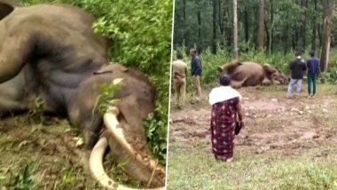 केरल: वायनाड के लोगों के साथ अनोखा रिश्ता रखने वाले प्रसिद्ध हाथी मणियन का निधन, जंगली हाथियों के झूंड ने किया था हमला