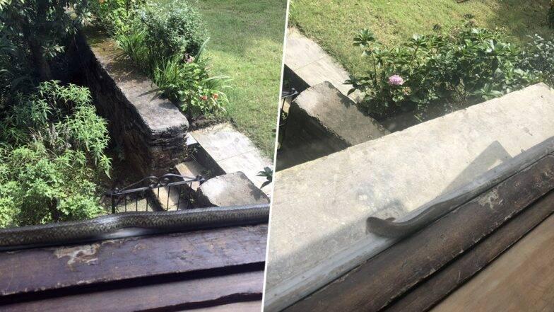 शर्मिष्ठा मुखर्जी के कॉटेज की खिड़की पर चढ़ा जहरीला सांप, कांग्रेस प्रवक्ता ने तस्वीरें पोस्ट कर बताया 'सबसे डरावना अनुभव'