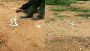 तमिलनाडु: रिहायशी इलाके में 3 फीट लंबा सफेद कोबरा मिलने से मचा हड़कंप, रेस्क्यू कर सांप को जंगल में छोड़ा गया