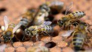 उत्तर प्रदेश: कॉलेज में चल रही स्पोर्ट्स कॉम्पिटिशन के दौरान मधुमक्खियों ने किया हमला, 50 छात्राएं घायल