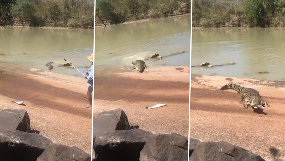 ऑस्ट्रेलिया: मछली पकड़ रही थी महिला, भूखा मगरमच्छ पड़ गया पीछे, देखें वायरल वीडियो