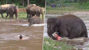 इंसान को डूबता हुआ देखकर, हाथी का बच्चा उसे बचाने के लिए पानी में कूदा, देखें इमोशनल कर देनेवाला वीडियो