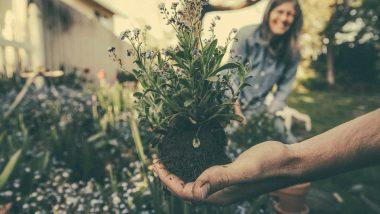 बागवानी से घर ही नहीं सेहत भी होती है हरी-भरी, जानें गार्डनिंग से होने वाले कमाल के फायदे