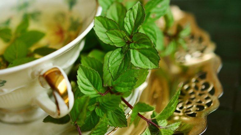 पुदीने की पत्तियों में छुपा है सेहत का खजाना, इसमें मौजूद है इन बीमारियों का कारगर समाधान