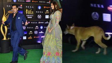 IIFA 2019 के ग्रीन कारपेट पर सलमान खान के पीछे-पीछे फंक्शन में घुसा कुत्ता, वीडियो हुआ वायरल