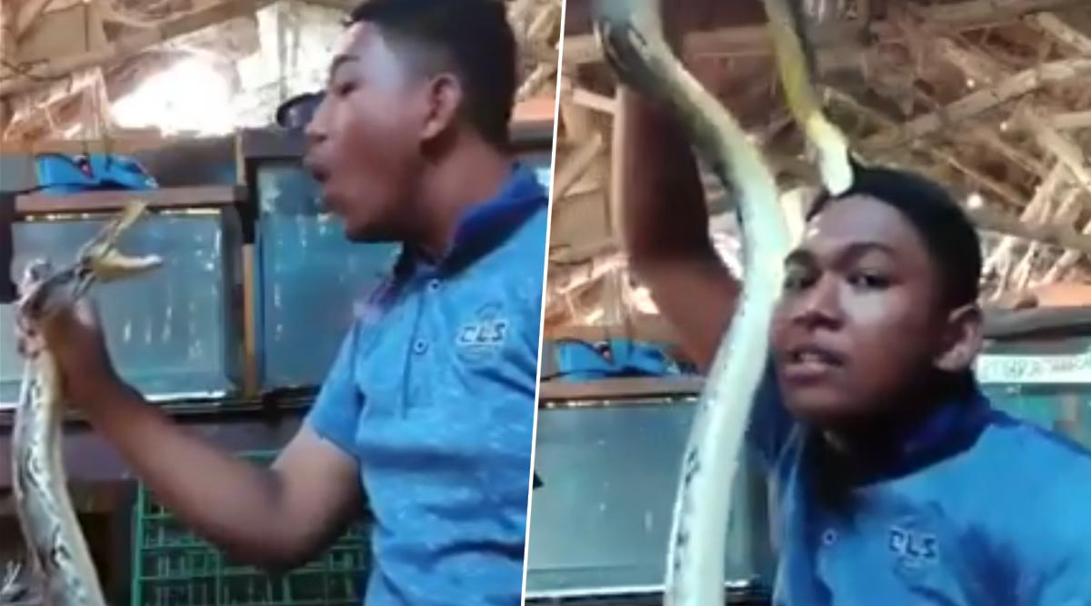 शख्स सांप के साथ कर रहा था मस्ती, अजगर को आया गुस्सा, उसके बाद जो हुआ..देखें वायरल वीडियो