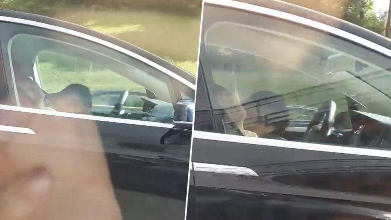 कार चलाते हुए अचानक लग गई ड्राइवर की आंख, उसके बाद हुआ कुछ ऐसा...देखें वायरल वीडियो