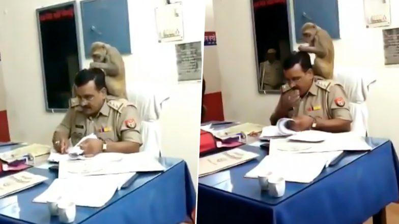 पीलीभीत: बंदर ने यूपी पुलिस अधिकारी के कंधे पर बैठकर निकाली जुएं, देखें वायरल वीडियो