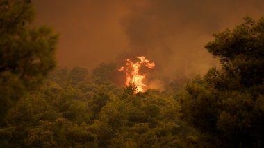 कैलिफोर्निया के जंगल में लगी आग पर काबू पाने का प्रयास जारी, 31 इमारतें हुई हादसे का शिकार